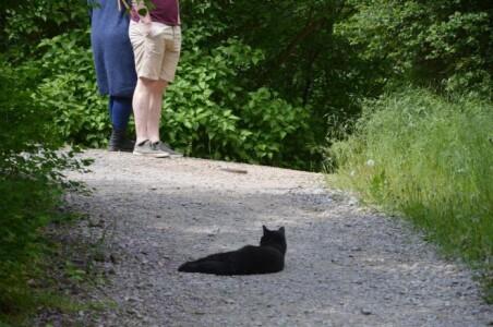 O tânără a găsit o pisică pe stradă și a decis s-o ia acasă, dar în scurt timp ...