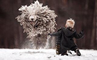 FOTO » Cele mai tari imagini cu un câine! Sunt absolut spectaculoase